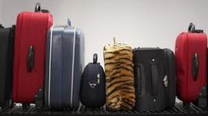 baggage_carousel-304