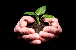 Parable+of+the+Seed+Growing